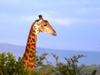 Things to do in St Lucia South Africa. Activities safaris