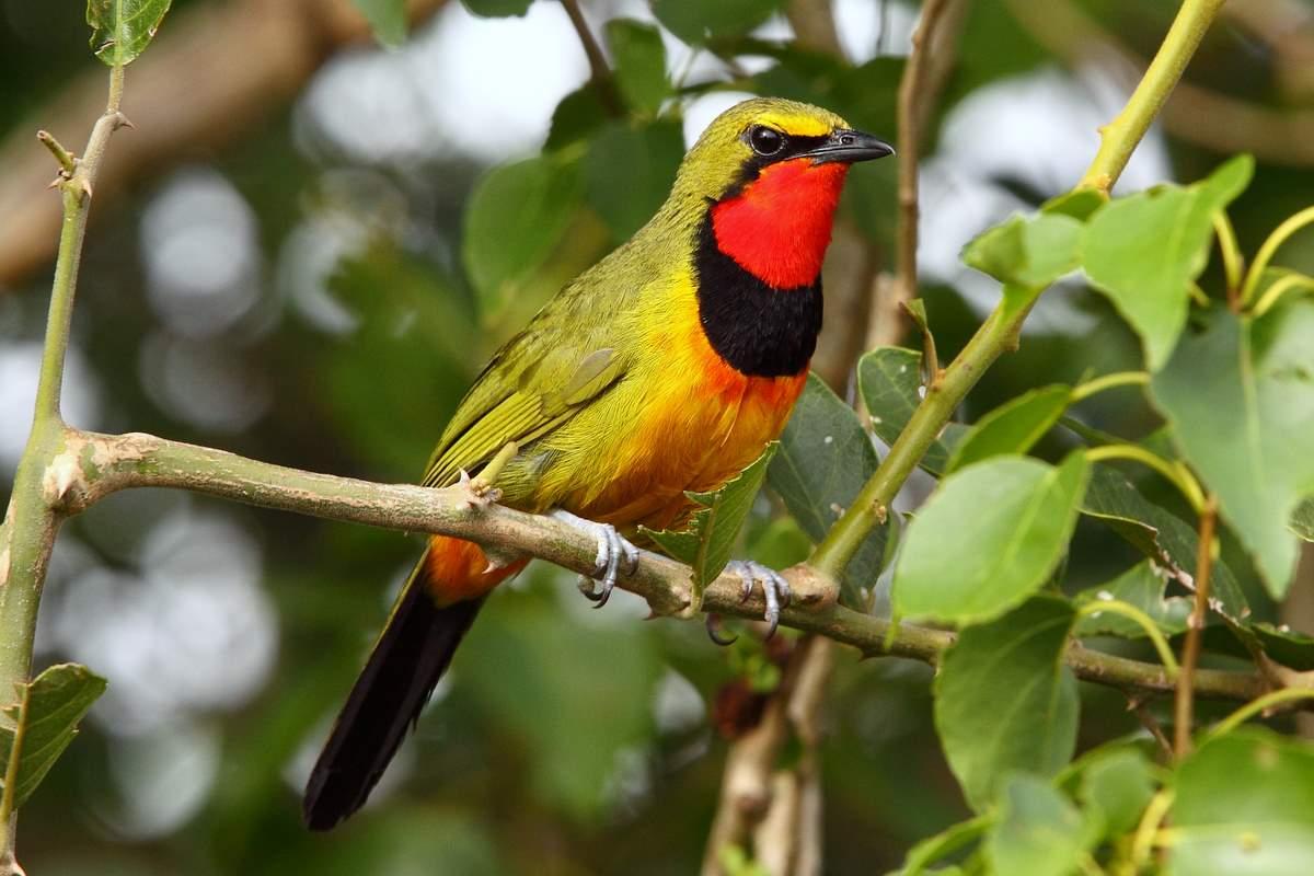 Bird Pictures Royalty Free Photos To Use Birds