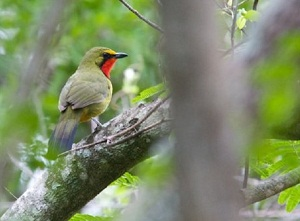 St Lucia Birdwatching South Africa. Birding tours in St Lucia