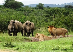 Hluhluwe-iMfolozi Safaris and Tours