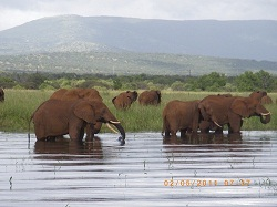 Elephants at Lake Jozini Dam