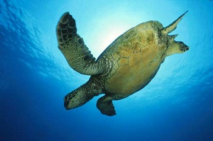 St Lucia Swim with Turtles South Africa