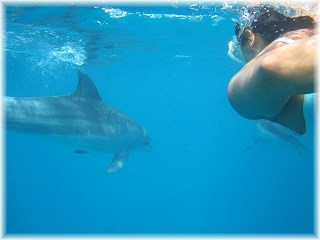 Things to do in St Lucia South Africa - Swim with wild dolphins
