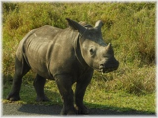 A safari is one of the things to do in St Lucia South Africa